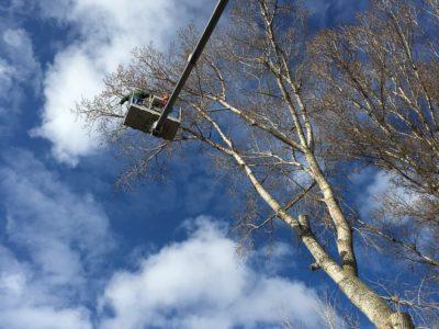 Orez stromov plošina výška 25 metrov Bratislava